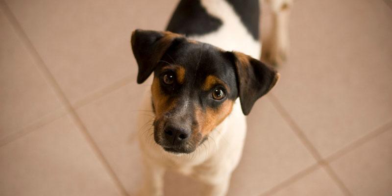 Foto de um Cão Vira Lata