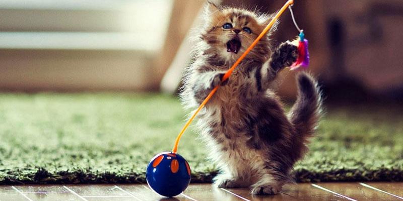 Foto da imagem de um gatinho