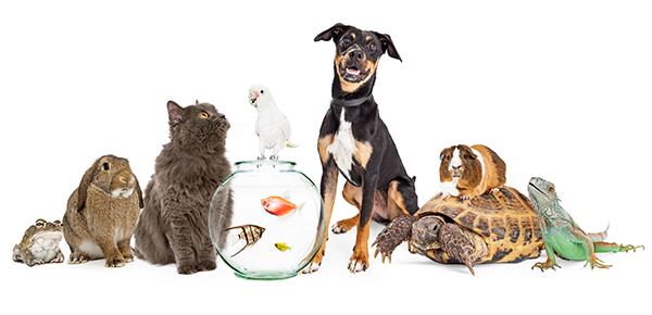 Grupo de animais: sapo, coelho, gato, cachorro, peixe, aves, tartaruga, roedor e iguana